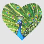 Glorious Peacock Heart Stickers