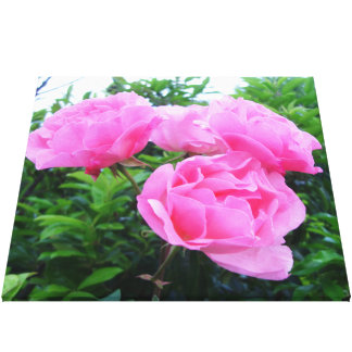 Glorious pink Roses Canvas Prints