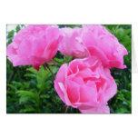 Glorious pink Roses Greeting Card