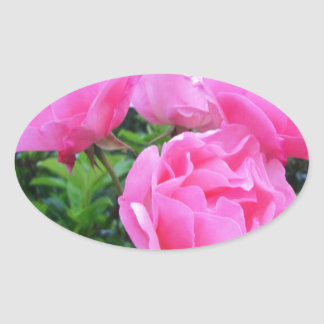 Glorious pink Roses Oval Sticker