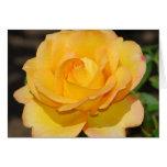 Glorious Rose Card