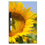 Glorious sunflowers! Dry-Erase board