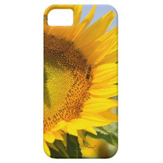 Glorious sunflowers! iPhone SE/5/5s case