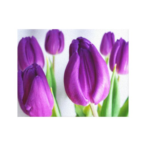 GLORIOUS TULIPS PHOTOGRAPH WALL ART Wrapped Canvas Canvas Prints
