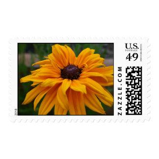 Glorious Yellow Daisy Postage