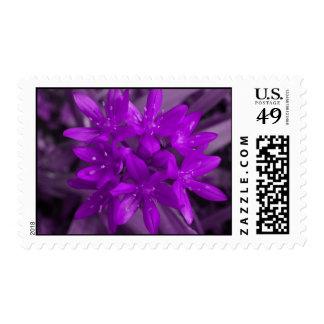 Glory Of The Snow (Purple) US Postage Stamp