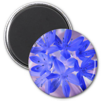 Glory Of The Snow Shocking Blue Magnet