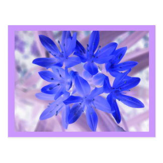 Glory Of The Snow Shocking Blue Postcard