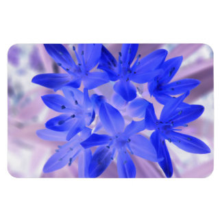 Glory of the Snow Shocking Blue Premium Magnet