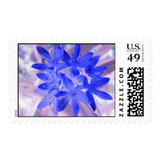 Glory Of The Snow Shocking Blue US Postage Stamp