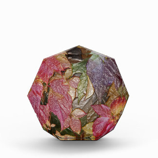 Glossy autumn leaves, Wax-Look 001.1 Award