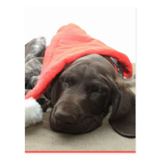 Glossy Grizzly Christmas Pointer Postcard
