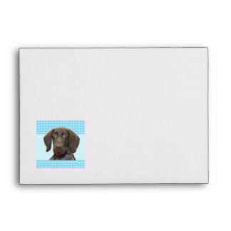 Glossy Grizzly in Blue Stationary Envelopes