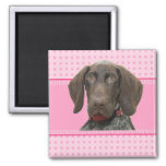 Glossy Grizzly in Pink 2 Inch Square Magnet