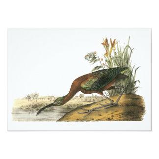 Glossy Ibis, John Audubon Card