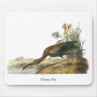 Glossy Ibis, John Audubon Mousepads