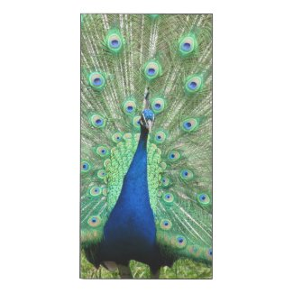 Glossy Panel - Peacock