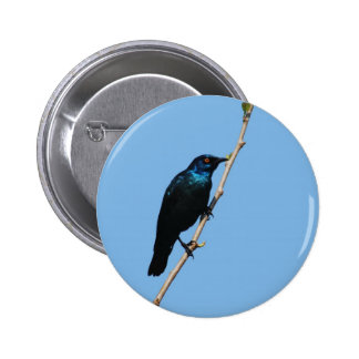 Glossy Starling blue bird of happiness Pinback Buttons