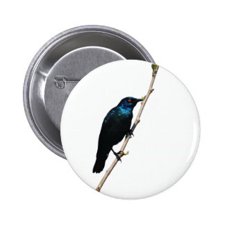 Glossy Starling blue bird of happiness Pins
