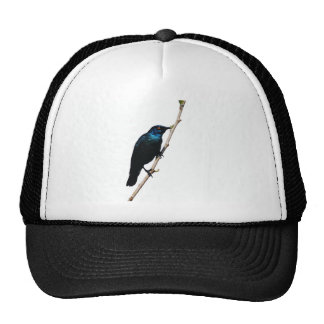 Glossy Starling blue bird of happiness Trucker Hat