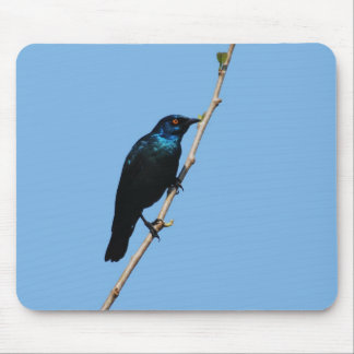 Glossy Starling blue bird of happiness Mouse Pad