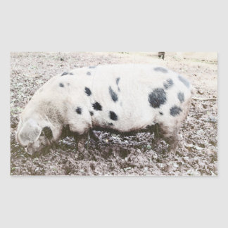 Gloucestershire spotted pig rectangular sticker