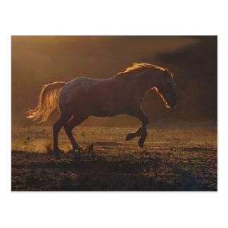 Glowing Back-light running horse Postcard