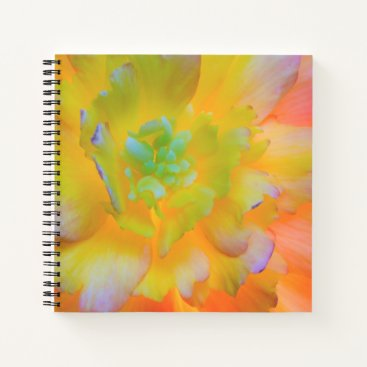 USA Themed Glowing Begonia Blossom | Seabeck, WA Notebook