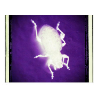 glowing bug with purple and black postcard