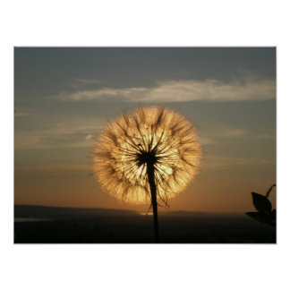 Glowing Dandelion Poster