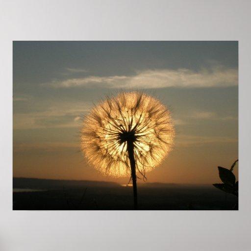 Glowing Dandelion Print