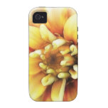 Glowing Golden Zinnia Case-Mate iPhone 4 Cover