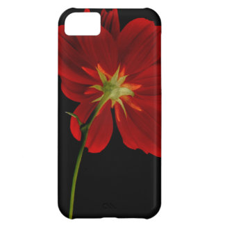Glowing in Darkness/Red Gerbera Photography iPhone 5C Cover