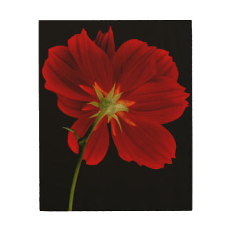 Glowing in Darkness/Red Gerbera Photography Wood Wall Art