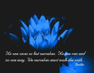 Lotus Flower Quote Art Wall Dcor Zazzle