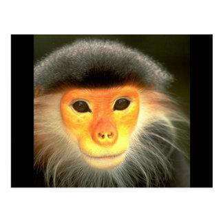 Glowing Monkey Postcard
