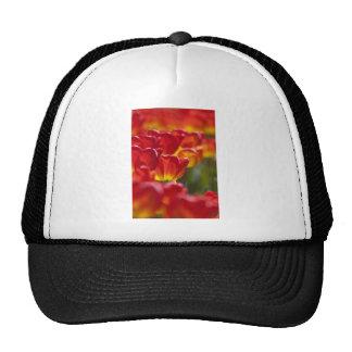 Glowing Orange Tulips Hat