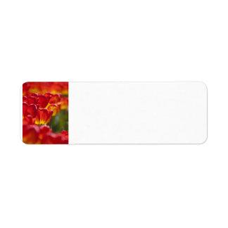 Glowing Orange Tulips Custom Return Address Labels