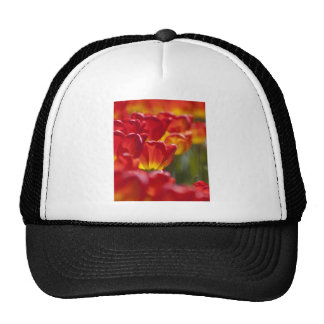 Glowing Orange Tulips Mesh Hat