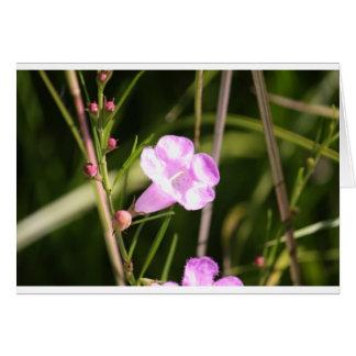 Glowing Purple wildflower Cards