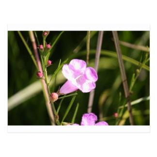 Glowing Purple wildflower Postcards