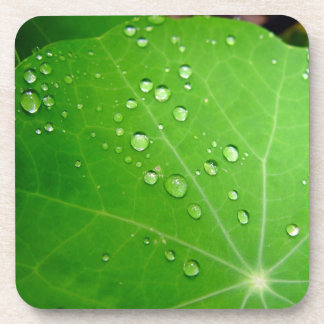 Glowing Raindrops on nasturtium leaf Beverage Coaster