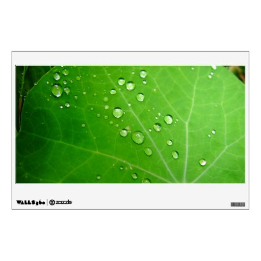 Glowing Raindrops on nasturtium leaf Room Decals