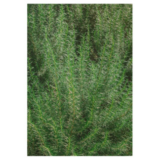 Glowing Rosemary Bushes Wood Poster