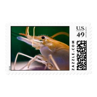 Glowing Shrimp - Postage Stamp