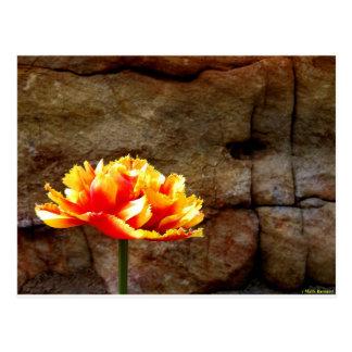 Glowing Tulip Post Card