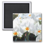 Glowing White Phalaenopsis Orchids Refrigerator Magnet