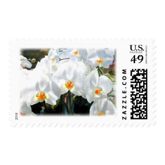 Glowing White Phalaenopsis Orchids Postage