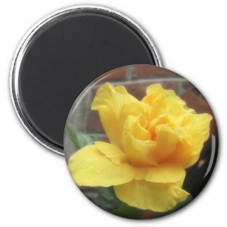 Glowing Yellow Hibiscus 2 2 Inch Round Magnet