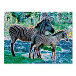 glowing zebras 01 postcard